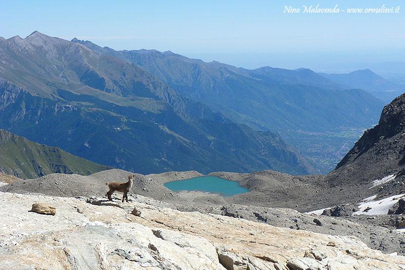 Stambecco e Lago dell\'Agnello