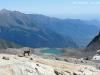 Stambecco e Lago dell'Agnello